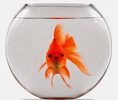 Realtà (per ora) rimosse, e un pesciolino rosso